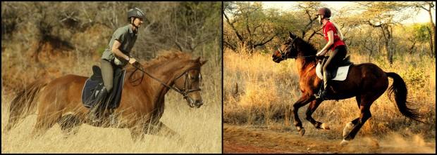 Foto Auswahl Cavallo3