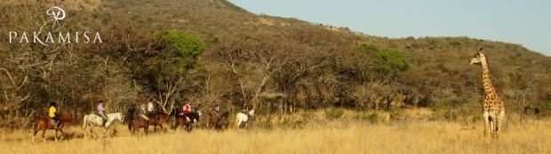 Pakamisa Giraffe