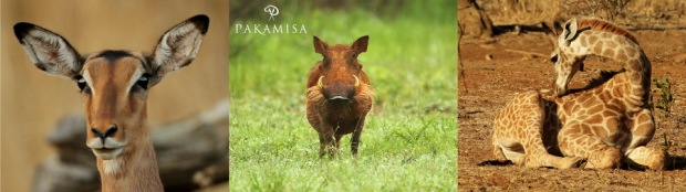 Pakamisa Wildlife