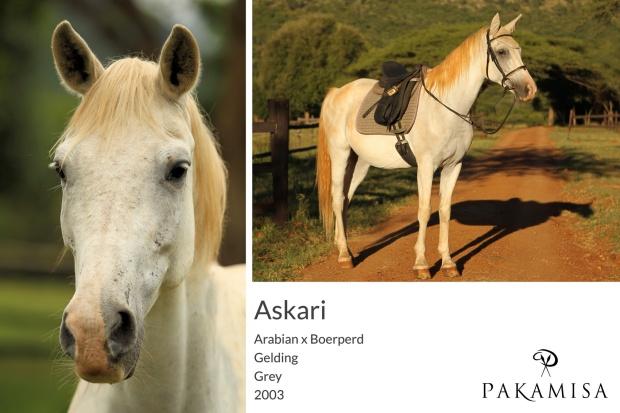 Askari - Portrait