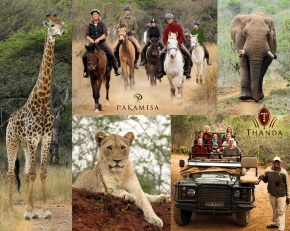 _Collage - Thanda Pakamisa II