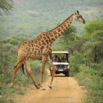 Game Drive 5 - Photo by Christian Sperka Photography