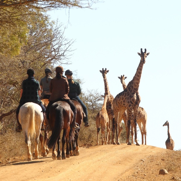 5 days Horseback Safari at Pakamisa
