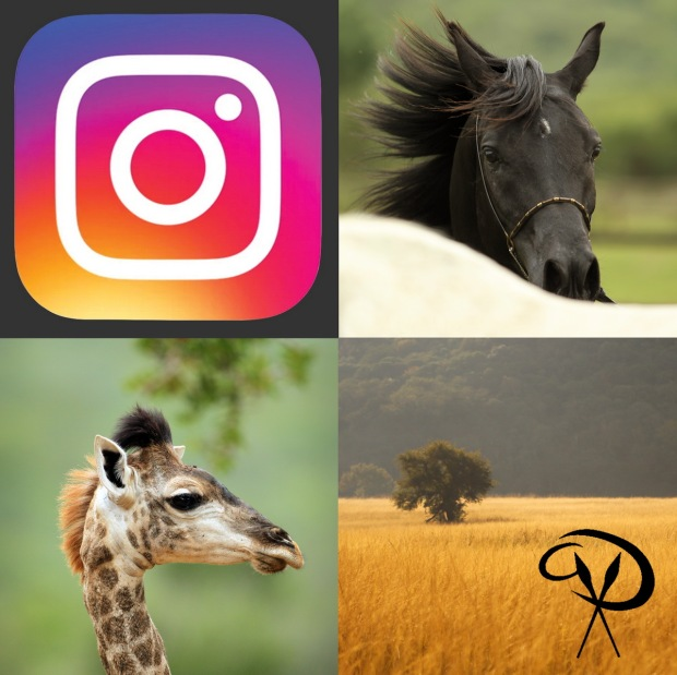 instagram-pakamisa